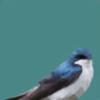 Photosoups's avatar