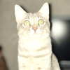 pikoleto123's avatar