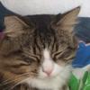 pilttiohyvee's avatar