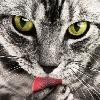 pippenrose's avatar