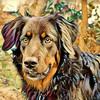 Pixelansicht's avatar