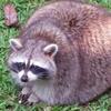PizzaChild11's avatar