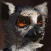 plaguedaemon's avatar