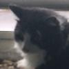 planxtafroggie's avatar