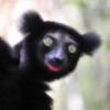 Player17's avatar