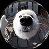 plockman's avatar