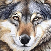 plumedharfang's avatar