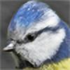 plumita1's avatar