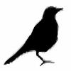 poetic's avatar