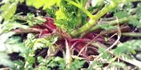 Poisonous-Plants