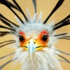 pokemon-comix's avatar