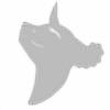 Polar-Wildpedia's avatar