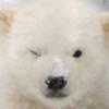 polar27's avatar