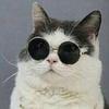 Polite-Cherry's avatar