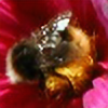 polsy's avatar