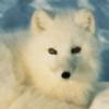 Ponchu0's avatar