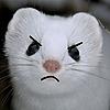 PoppetthePuppet101's avatar