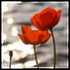 poppies-comic's avatar