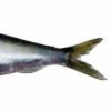porriplus's avatar