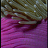powerpuffgir's avatar