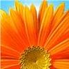 poyraz32's avatar