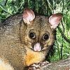 PreetKehra's avatar