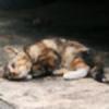 Pretty-Kitty8's avatar