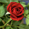 princesspink518's avatar