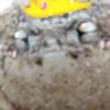 PrincessPuru's avatar