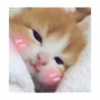ProbzCaonimama's avatar