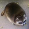 prokyonidae's avatar