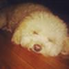 ProRom's avatar