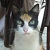 protuber's avatar