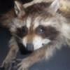 Prov12-10Taxidermy's avatar