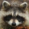 Ptimac's avatar