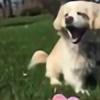 pugscandraw2's avatar