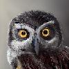 Pulsatrixx's avatar