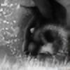 PumastormDraws's avatar