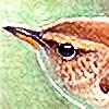 Punakylkirastas's avatar