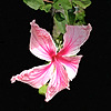 puppett99's avatar