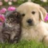 PuppyLover1263's avatar