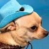 Puppylover5's avatar