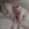 pupqet's avatar