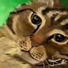 Purrfect-Cattitude's avatar