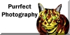 PurrfectPhotography's avatar