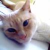 Quadricat's avatar