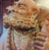 quanghien74's avatar