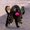 QueenEmsRules's avatar