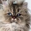 questionableUpDog's avatar