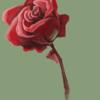 Qwafee's avatar